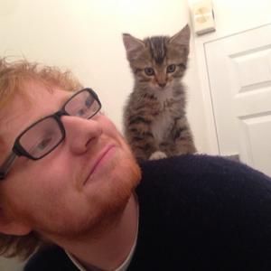 Ed-Sheeran catlover