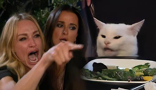 Meme del gato en la mesa | La Historia Detrás del Meme