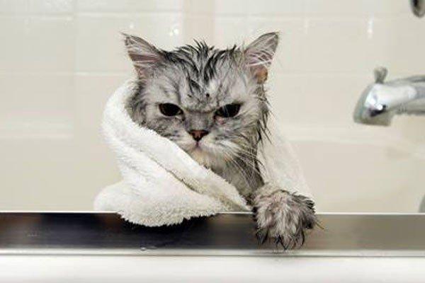 5 cosas que los gatos odian