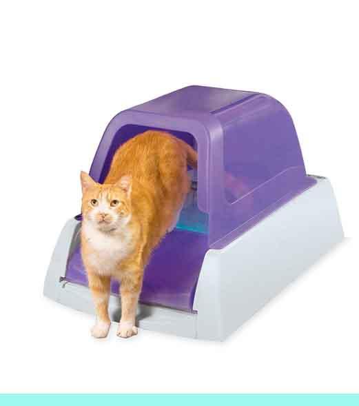Productos de limieza para gatos en México