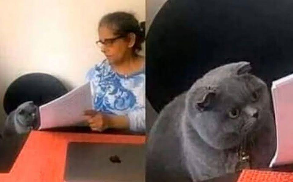 ¿Cuál es el origen del meme del gato regañado por una mujer?