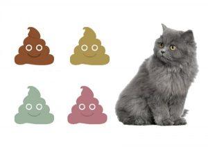 La popó de gato puede ayudar a curar el cáncer