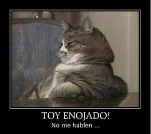 Ropa para gato en México