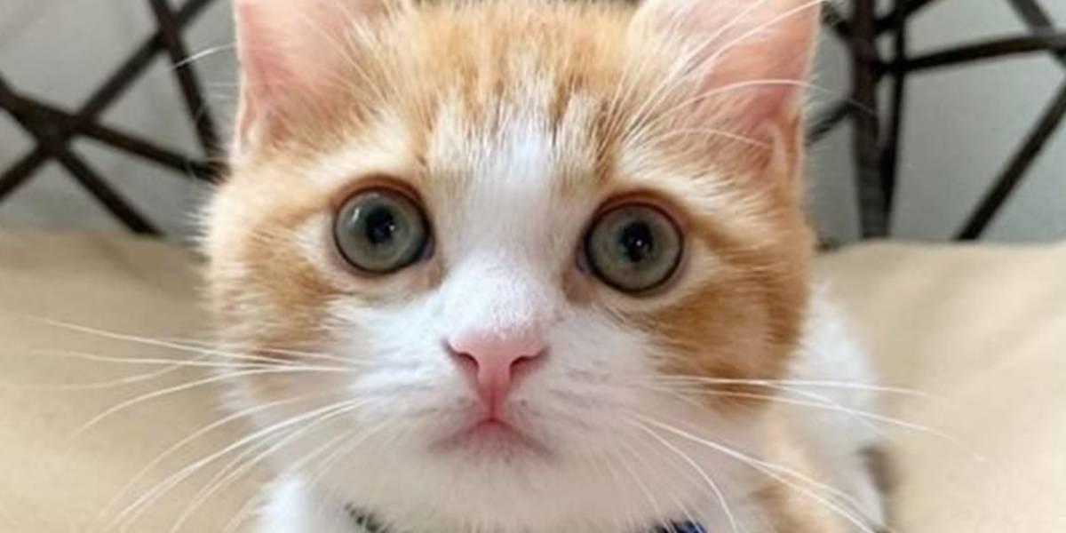 ¿Tu gato disfruta cuando lo acaricias?
