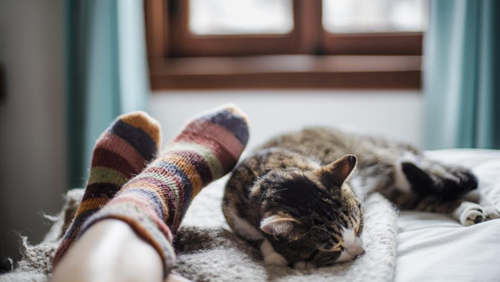Beneficios de dormir junto al michi