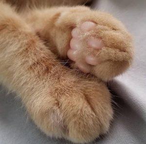 La patitas de los gatos son poesía para los catlovers