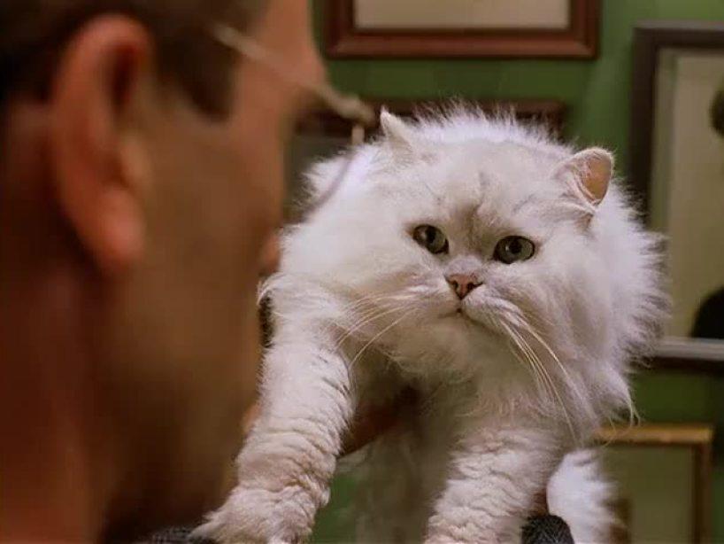 Los Gatos más famosos en la Televisión