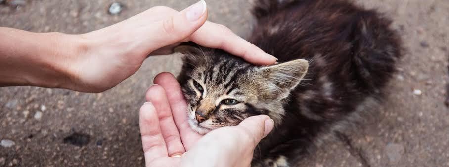 5 cosas para tomar en cuenta al adoptar gatos.