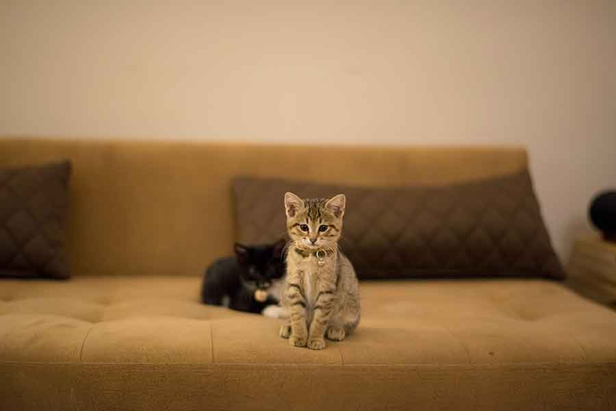 Cómo hacer para que el gato se adapte en su nuevo hogar