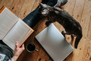 ¡A los gatos les gustan las personas! (Bueno solo algunas)