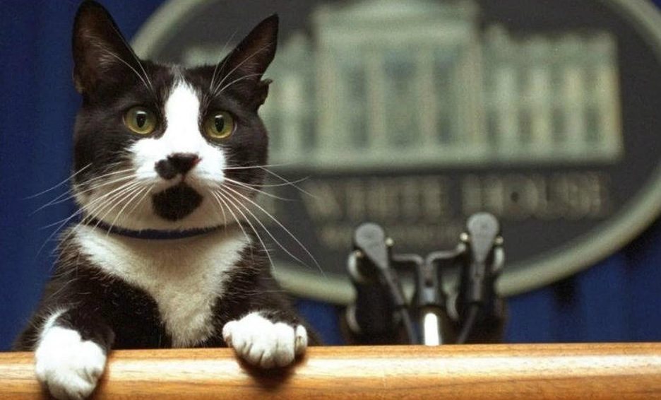 Se dice que un gato se unirá a los Biden en la Casa Blanca