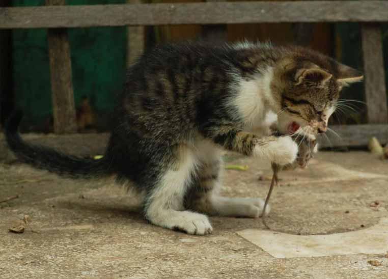 ¿Por qué creemos que los gatos son hostiles?