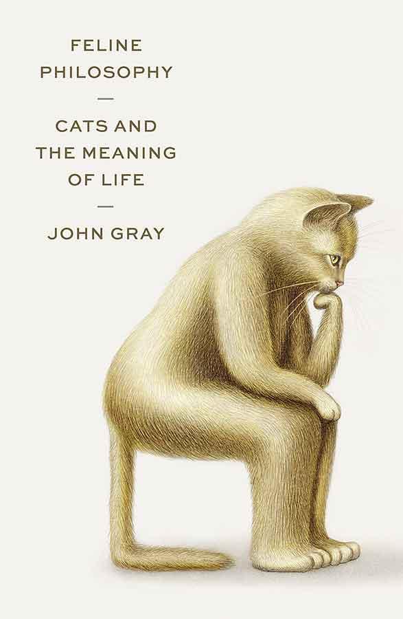 qué podemos aprender de los gatos