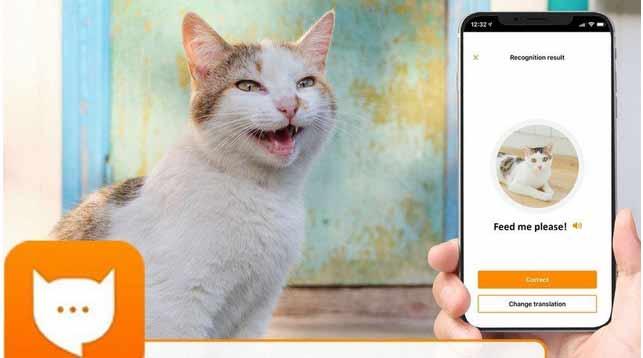 """""""MeowTalk"""" la innovadora aplicación  de Alexa para traducir los miau de tu gato."""