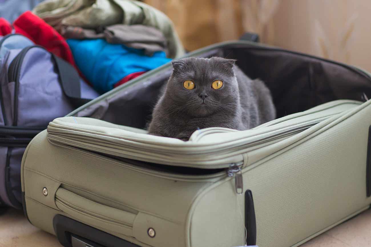 Cómo viajar con tu Gato